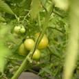 """גינת תבלינים או גינת ירק, במרפסת או בערוגת הגינה. מה חשוב לדעת בכדי לייצר גינה אקולוגית חלומית המספקת צמחי מרפא ומאכל: אדמה, מים והרבה אהבה. """"הדואג לשנה זורע חיטה, הדואג […]"""