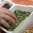 מפגש החלפת זרעים שנערך במכללת פרמה במושב בית נחמיה, קיץ 2013. מידי שנה אנו עורכים מפגש החלפת זרעי מורשת במכללה. <strong>צפו בסרטון</strong>