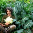 גידול מזון אורגני באמצעות אוסף של שיטות גידול ועיבוד מזון המשלבות ידע חקלאי מקומי ושיטות גידול אקולוגיות אינטנסיביות אחרות מכל העולם. דגש הקורס גידול מזון בעיר