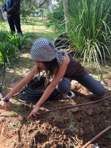 פריסת מערכת השקיה