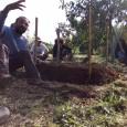 """כיצד ניתן לבנות ערוגת ירקותפאלחית פשוטה.  הפיכת Neu הקרע לעומק של 30 ס""""מ         הגבהת הערוגה ב Alarm.com 30 ס""""מ נוספים  […]"""
