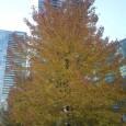רוצים לדעת כמה שווה העץ שליד ביתכם? בשנים האחרונות הולכת וגוברת הפעילות הציבורית להגנת עצי ישראל, ולא בכדי. העץ הנו היצור החי בעל המימדים הגדולים ביותר ובעל משך חיים הארוך […]